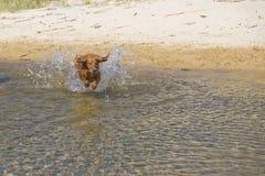 Jeux de chien sur la plage Photos libres de droits