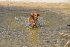 Jeux de chien sur la plage Image libre de droits
