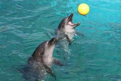 Jeux de dauphin Photo stock