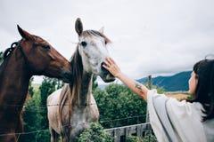 Jeux de femme avec des chevaux Photos stock