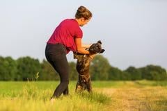 Jeux de jeune fille avec un chien de boxeur Image stock