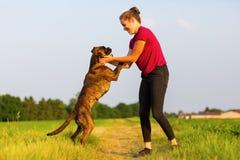 Jeux de jeune fille avec un chien de boxeur Image libre de droits