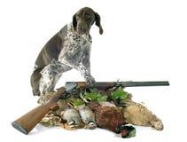 Jeux et chien de chasse Images libres de droits