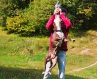 Jeux stafordshirsky de terrier de chien avec le propriétaire Photographie stock libre de droits