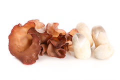 Jew`s ear and straw mushrooms on white background - Isolated Stock Photos