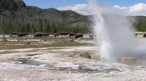 Jewel Geyser, Yellowstone National Park Royalty Free Stock Photos