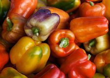 Jewel peppers Stock Images