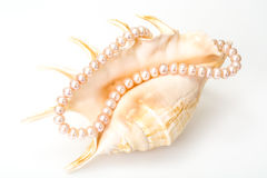 Jewel of pink pearls. Studio Photor Stock Photos