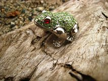 Jeweled Frog on a Log Closeup. Jeweled frog climbing up a log Royalty Free Stock Photos