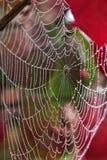 Jeweled pająk sieć Obraz Royalty Free