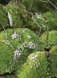 jewelery листва зеленое Стоковые Фото