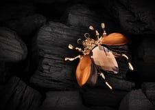Jewellery pluskwy broszka z gemstone na czerń węgla tle, kopia obrazy stock