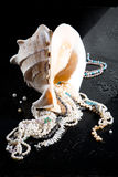 Jewelry And Shell Royalty Free Stock Photography