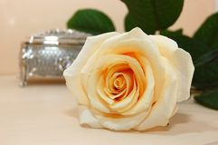 Jewelry box with white rose Stock Image
