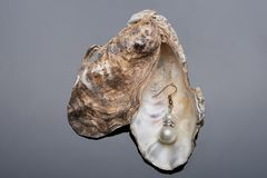 Jewelry pearl earring Royalty Free Stock Photography