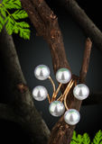 Jewelry ring with pearl on twig, dark background Stock Photography