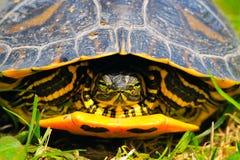 Jewelry turtle Stock Image