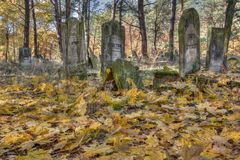 Jewish cemetary. Otwock, Poland - October 28, 2015:  Devastated Jewish cemetary in Otwock town Stock Images