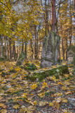 Jewish cemetary. Otwock, Poland - October 28, 2015:  Devastated Jewish cemetary in Otwock town Royalty Free Stock Images