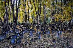 Jewish cemetery. Old graves at historic Jewish cemetery, Okopowa Street in Warsaw, Poland Royalty Free Stock Photos