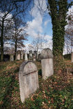 Jewish cemetery. Israelite , cemetery,old grass-grown, ,desolate,immortality,tomb Stock Photos