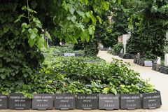 Dohany Street Synagogue, Memorial Cemetary stock images