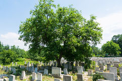 Jewish Cemetery. Headstones in an old, crowded Jewish cemetery Stock Photography