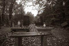 Jewish cemetery in Lodz, Poland Royalty Free Stock Photo