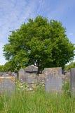 Jewish cemetery in Muiderberg Royalty Free Stock Photos