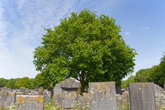 Jewish cemetery in Muiderberg Stock Photos