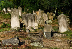 Jewish cemetery in Otwock (Karczew-Anielin) Royalty Free Stock Photos