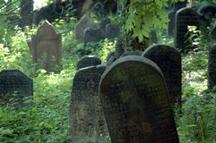 Jewish cemetery. Tombstones at a jewish cemetery situated in a green forest in czech republic Stock Image
