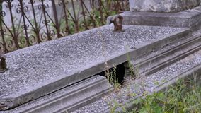 Jewish cemetery in Ukraine. Jewish graves stock video