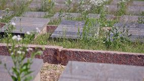 Jewish cemetery in Ukraine Jewish graves. Jewish cemetery in Ukraine. Jewish graves stock video