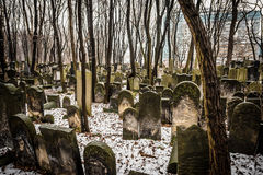 Jewish Cemetery. Warsaw, Poland - January 1, 2015: Historic old Jewish Cemetery in winter Royalty Free Stock Photos
