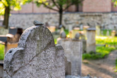 Jewish cemetry in Krakow Royalty Free Stock Photos