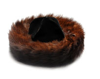 Jewish fur hat. Traditional male jewish fur hat over white stock image