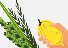 Jewish holiday Sukkot. Lulav ,Etrog, Arava and Hadas.  Stock Image