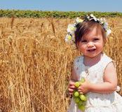 Jewish Holidays - Shavuot Royalty Free Stock Image