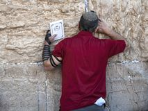 Red shirted jewish man holding the old testament and praying at the wailing wall, Jerusalem / Israel royalty free stock photography