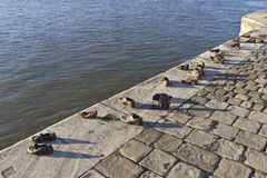 Jewish memorial in Budapest. At Danube Royalty Free Stock Photography