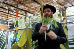 Jewish Orthodox Rabbi blessing on the Four Species in a Sukkah. On sukkot Feast of Tabernacles, Feast of the Ingathering or Feast of booths Stock Photo