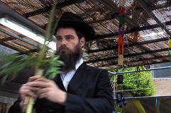 Jewish Orthodox Rabbi blessing on the Four Species in a Sukkah. On sukkot Feast of Tabernacles, Feast of the Ingathering or Feast of booths Royalty Free Stock Photography