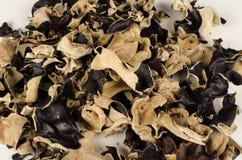 Jews Ear mushroom Stock Images