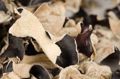 Jews Ear mushroom Royalty Free Stock Photo