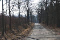 Jezdnia w lesie zdjęcie stock
