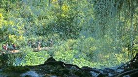 jezior park narodowy plitvice siklawy europejczycy zdjęcie wideo