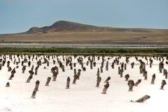jeziora krajobrazu sól obraz stock