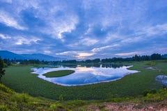 Jeziora obfituje z świrzepami Obrazy Stock