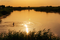 Jeziora skąpanie podczas gorącego letniego dnia Obrazy Royalty Free
